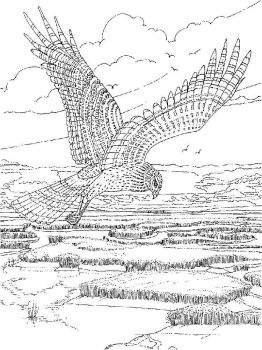 Hawks-birds-coloring-pages-13
