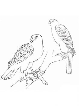 Hawks-birds-coloring-pages-2