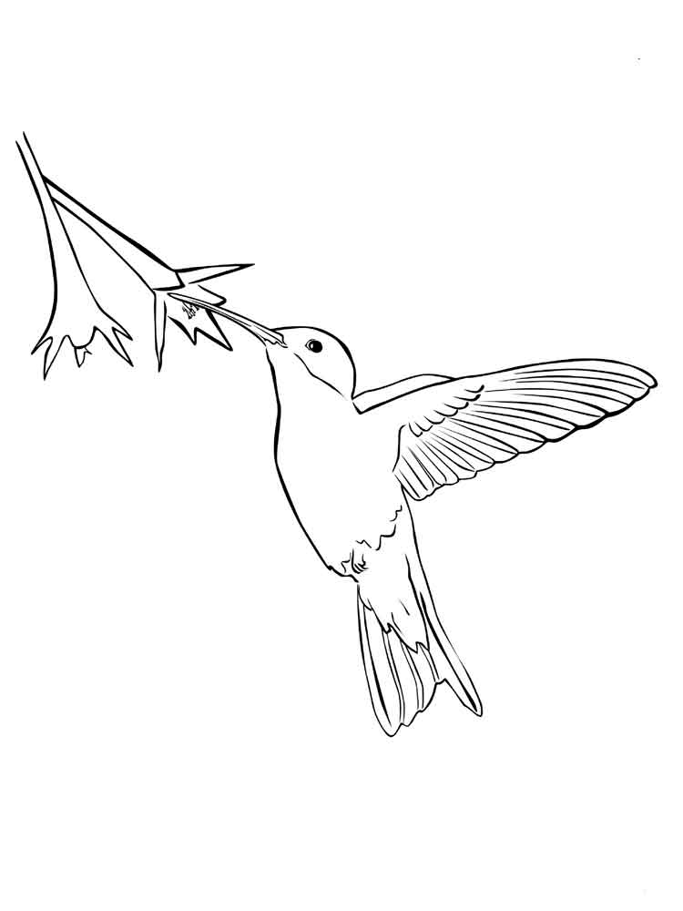 ausmalbilder kolibri  malvorlagen kostenlos zum ausdrucken