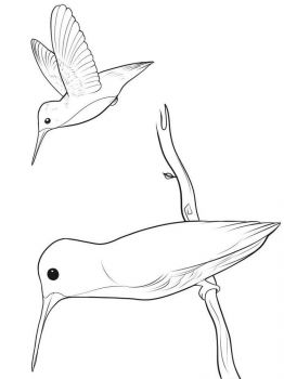 Hummingbirds-birds-coloring-pages-12