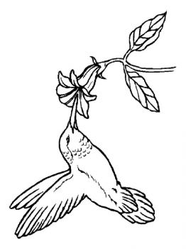 Hummingbirds-birds-coloring-pages-2
