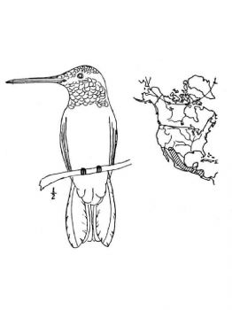 Hummingbirds-birds-coloring-pages-20