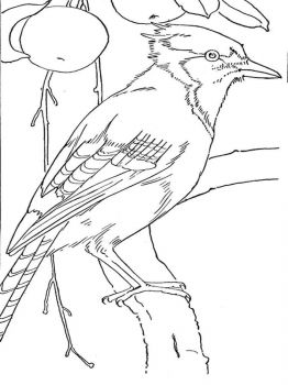 Jay-birds-coloring-pages-12