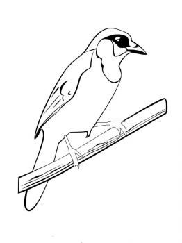 Jay-birds-coloring-pages-13