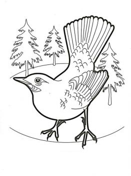 Jay-birds-coloring-pages-9