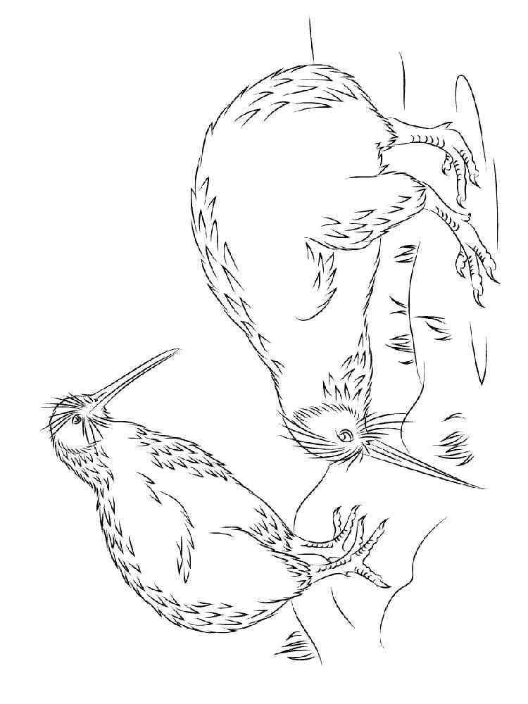 ausmalbilder kiwi vogel  malvorlagen kostenlos zum ausdrucken
