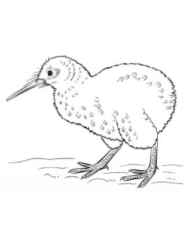 Kiwi-birds-coloring-pages-9