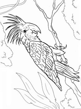Macaw-birds-coloring-pages-12