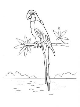 Macaw-birds-coloring-pages-2