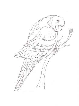 Macaw-birds-coloring-pages-3