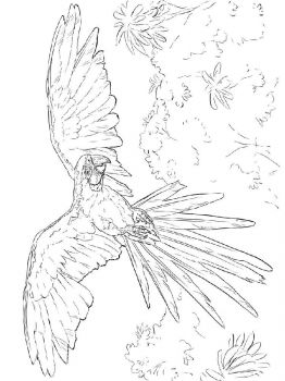 Macaw-birds-coloring-pages-4