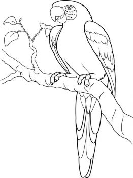 Macaw-birds-coloring-pages-7