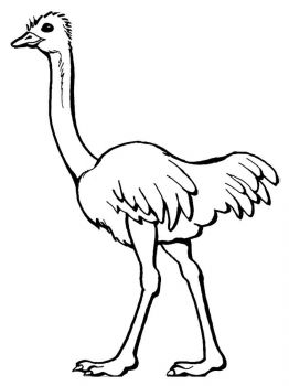 Ostrich-birds-coloring-pages-12