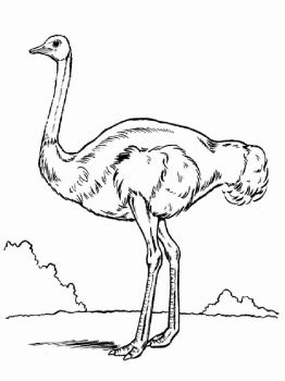 Ostrich-birds-coloring-pages-13