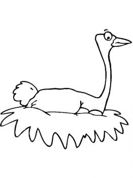 Ostrich-birds-coloring-pages-19