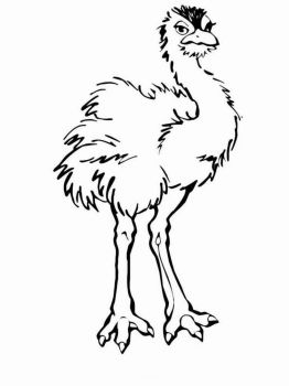 Ostrich-birds-coloring-pages-3