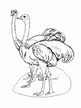 Ostrich-birds-coloring-pages-4