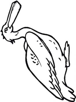 Pelicans-birds-coloring-pages-12