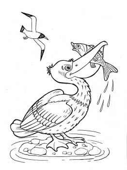 Pelicans-birds-coloring-pages-15
