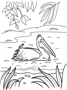 Pelicans-birds-coloring-pages-16