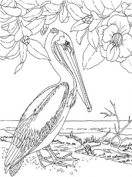 Pelicans-birds-coloring-pages-5