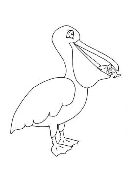 Pelicans-birds-coloring-pages-6
