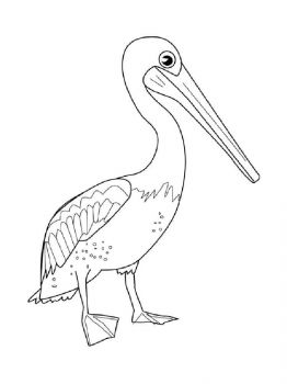 Pelicans-birds-coloring-pages-7