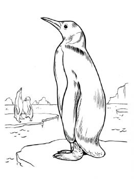 Penguins-birds-coloring-pages-12