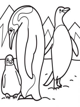 Penguins-birds-coloring-pages-7