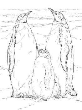 Penguins-birds-coloring-pages-9