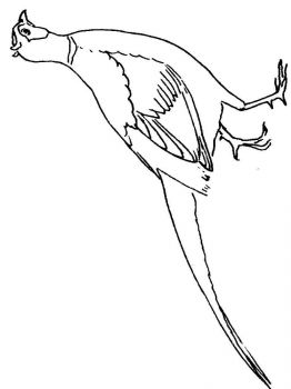 Pheasants-birds-coloring-pages-2