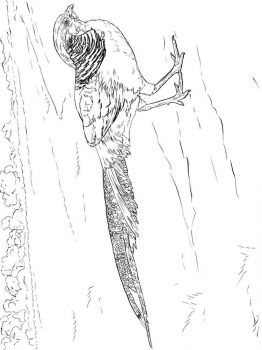 Pheasants-birds-coloring-pages-6