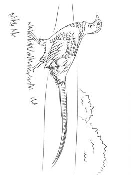 Pheasants-birds-coloring-pages-9