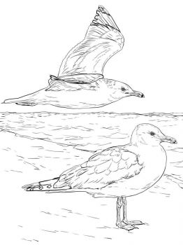 Seagulls-birds-coloring-pages-14