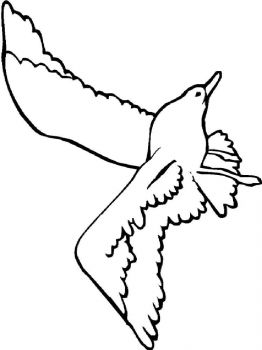 Seagulls-birds-coloring-pages-2
