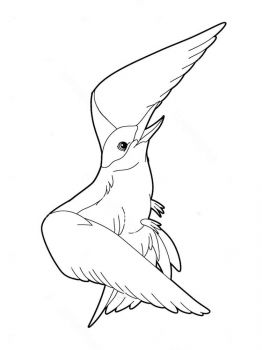 Seagulls-birds-coloring-pages-3