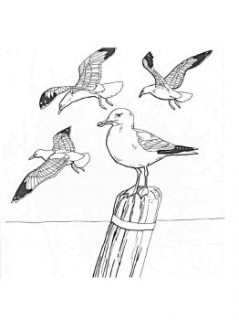 Seagulls-birds-coloring-pages-4