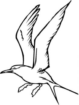 Seagulls-birds-coloring-pages-9