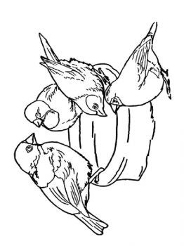 Sparrows-birds-coloring-pages-10
