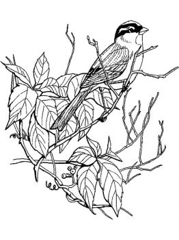 Sparrows-birds-coloring-pages-11