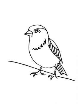 Sparrows-birds-coloring-pages-14