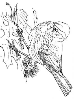 Sparrows-birds-coloring-pages-4