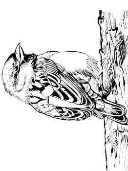 Sparrows-birds-coloring-pages-5