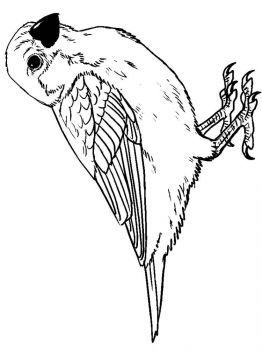 Sparrows-birds-coloring-pages-6