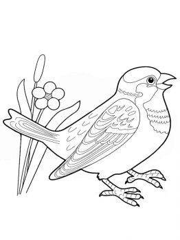 Sparrows-birds-coloring-pages-7