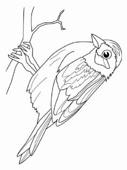 Sparrows-birds-coloring-pages-8
