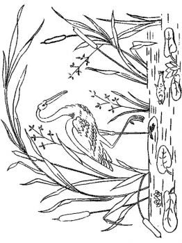 Stork-birds-coloring-pages-10