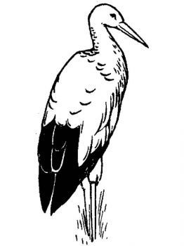 Stork-birds-coloring-pages-11