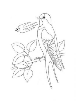 swallow-birds-coloring-pages-14