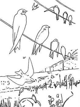 swallow-birds-coloring-pages-3